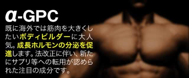 �{�f�B�r���_�[���p�́u��-GPC�v